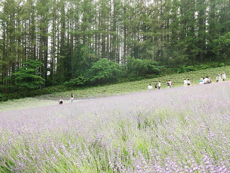 森の彩の畑