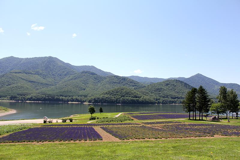かなやま湖ラベンダー園