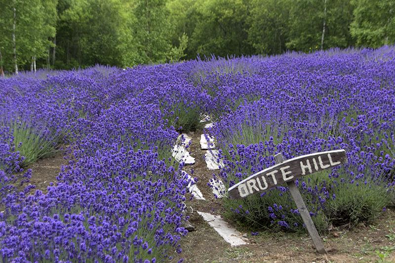 オルテの丘