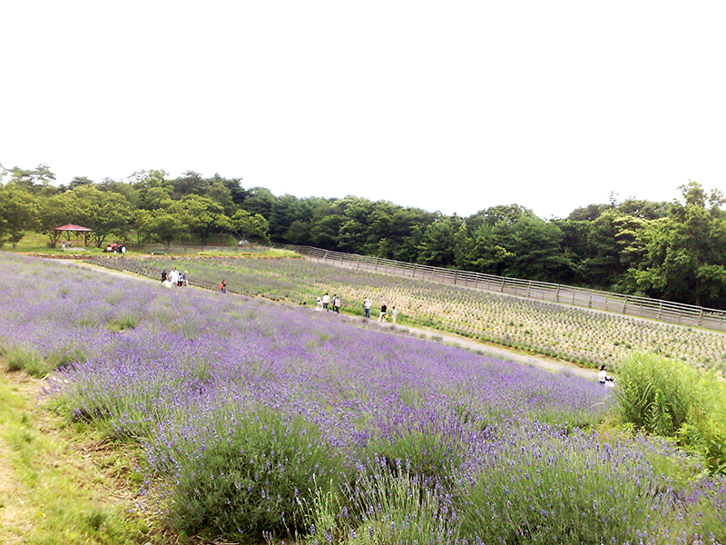 メナード青山リゾート