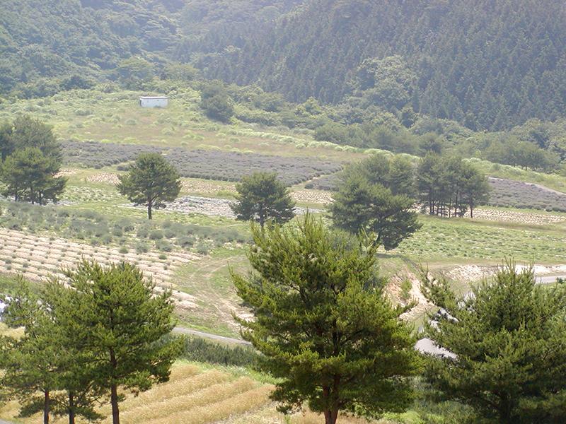 珠洲ハーブの丘